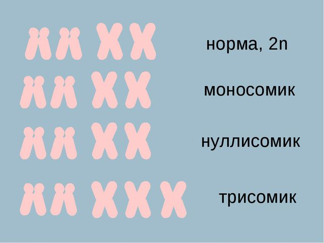 норма, 2n моносомик нуллисомик трисомик