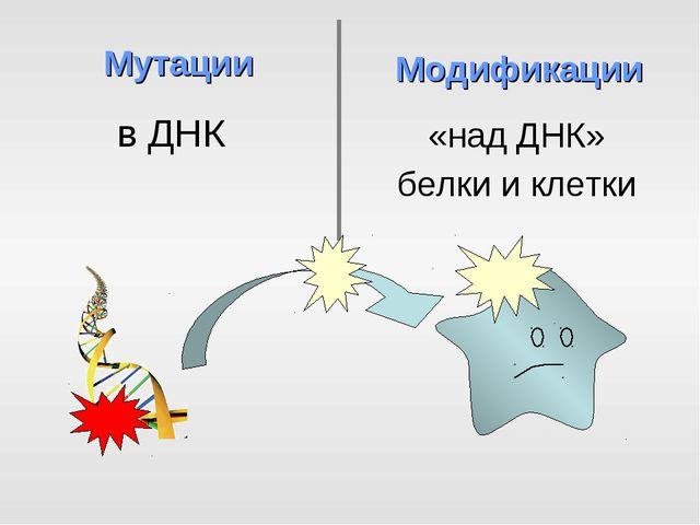в ДНК Мутации Модификации «над ДНК» белки и клетки