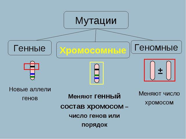 Новые аллели генов Меняют генный состав хромосом – число генов или порядок Ме...