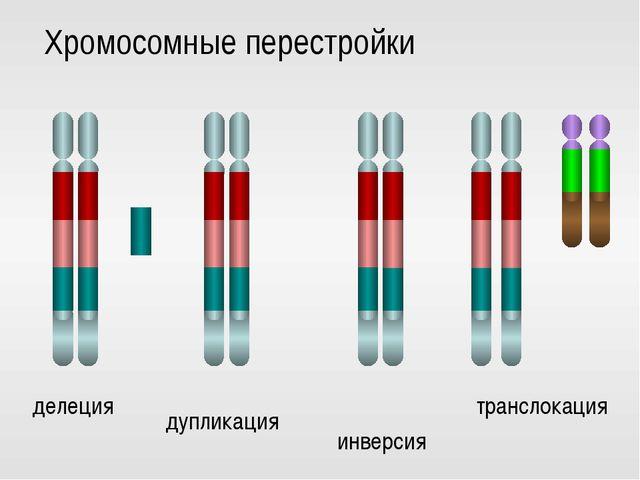 делеция дупликация инверсия транслокация Хромосомные перестройки
