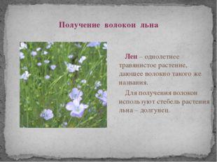 Получение волокон льна Лен – однолетнее травянистое растение, дающее волокно