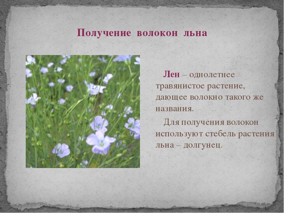 Получение волокон льна Лен – однолетнее травянистое растение, дающее волокно...