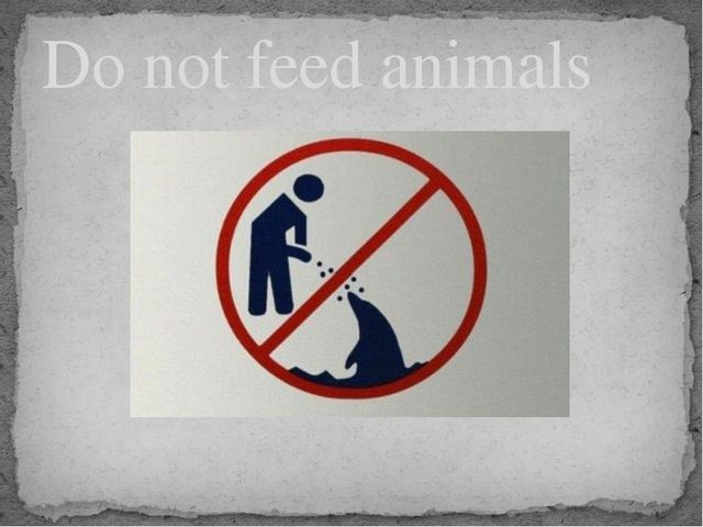 Do not feed animals