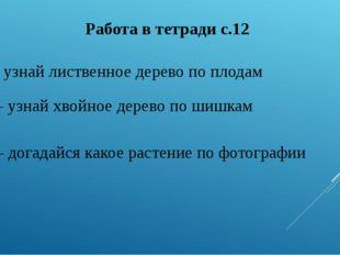 Работа в тетради с.12 №1 – узнай лиственное дерево по плодам № 2 – узнай хвой