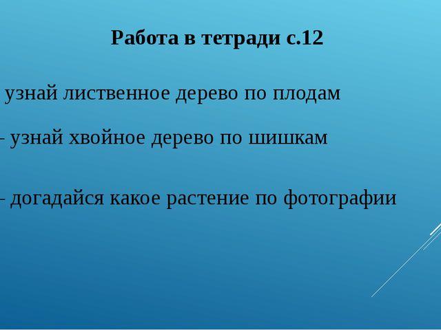 Работа в тетради с.12 №1 – узнай лиственное дерево по плодам № 2 – узнай хвой...