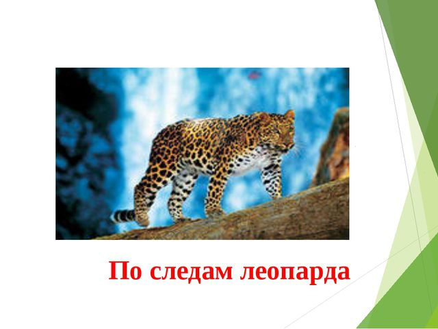 По следам леопарда