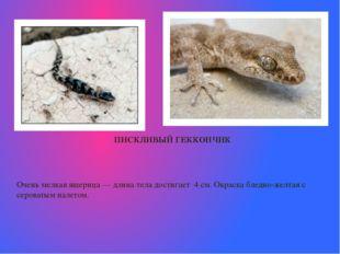 ПИСКЛИВЫЙ ГЕККОНЧИК  Очень мелкая ящерица— длина тела достигает 4 см.Окрас