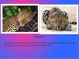 ЛЕОПАРД вид хищныхмлекопитающихсемействакошачьих, один из четырёх предста