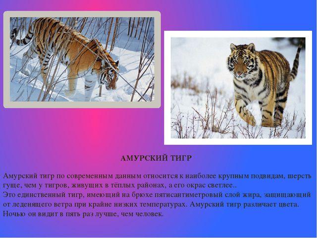 АМУРСКИЙ ТИГР Амурский тигр по современным данным относится к наиболее крупн...