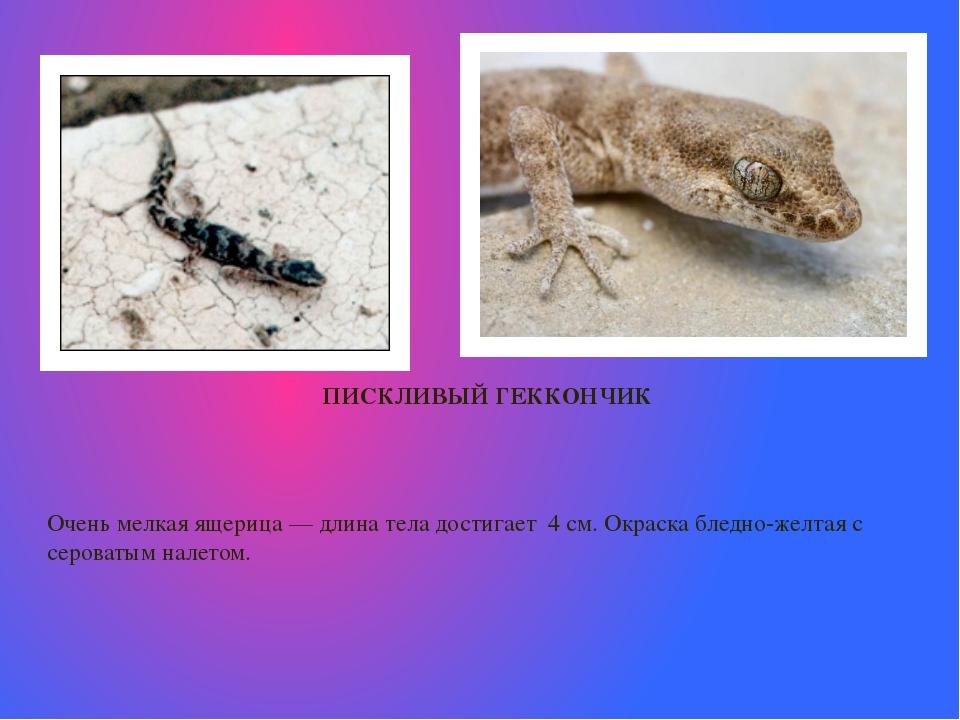 ПИСКЛИВЫЙ ГЕККОНЧИК  Очень мелкая ящерица— длина тела достигает 4 см.Окрас...