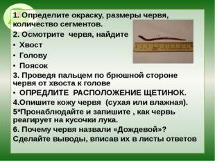 1. Определите окраску, размеры червя, количество сегментов. 2. Осмотрите черв