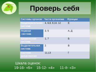 Проверь себя Шкала оценок: 19-16- «5» 15-12- «4» 11-8- «3» Системы органов Ча