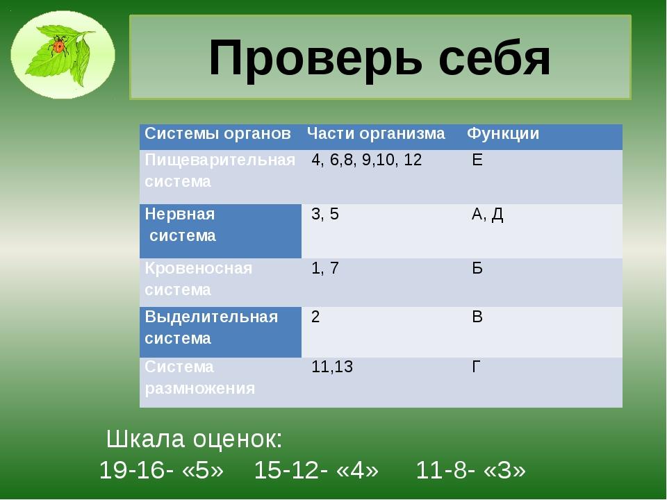 Проверь себя Шкала оценок: 19-16- «5» 15-12- «4» 11-8- «3» Системы органов Ча...