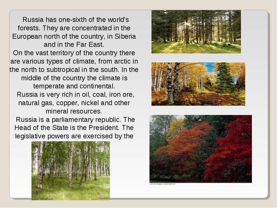 Russia has one-sixth of the world's forests. They are concentrated in the Eur...