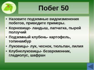 Стебель 30 Объясните причину роста стебля в высоту и толщину. Как определить