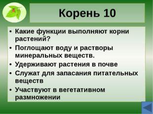 Корень 30 Назовите типы корневых систем растений, назовите их признаки, приве