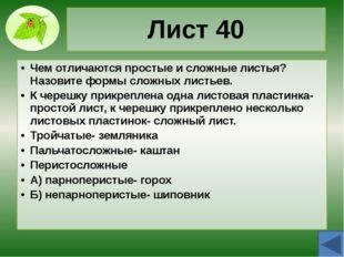 Почка 20 Чем отличаются вегетативные и генеративные почки? Из вегетативной ра