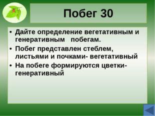 Стебель 10 Назовите функции стебля Опорная Проводящая Запасающая Рост Размнож