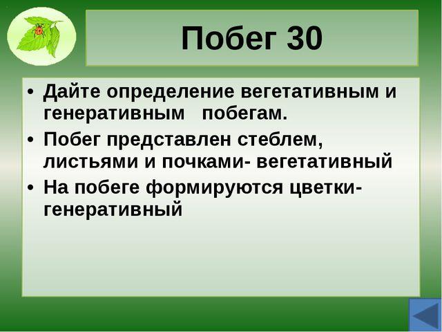 Стебель 10 Назовите функции стебля Опорная Проводящая Запасающая Рост Размнож...