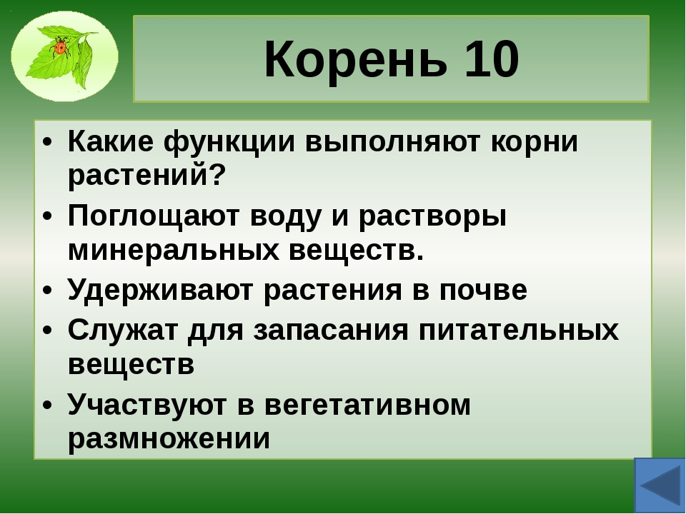 Корень 30 Назовите типы корневых систем растений, назовите их признаки, приве...