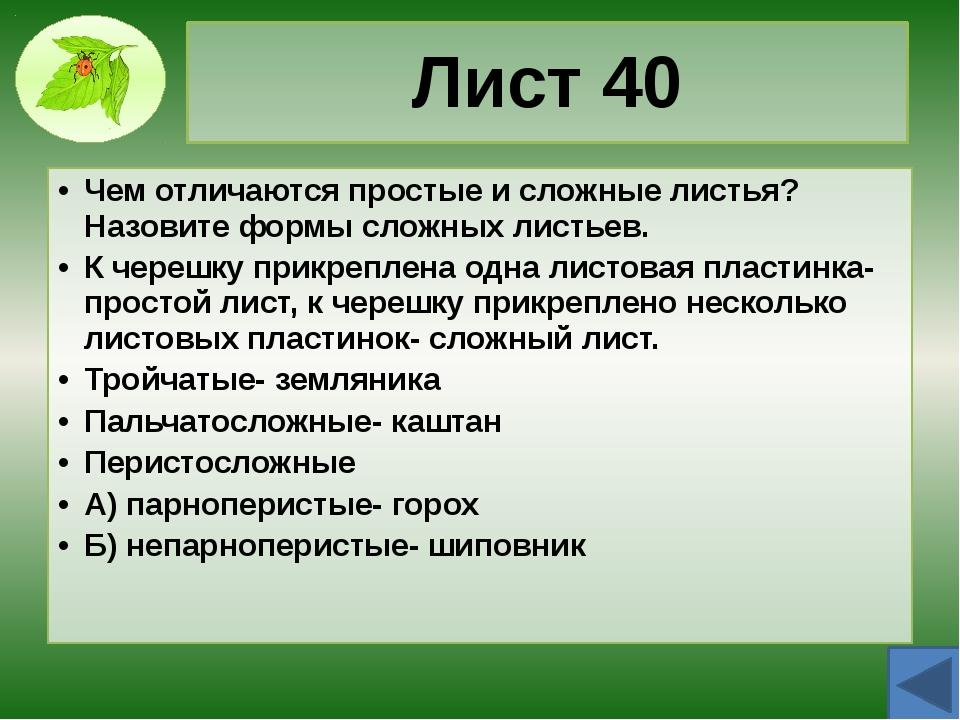 Почка 20 Чем отличаются вегетативные и генеративные почки? Из вегетативной ра...