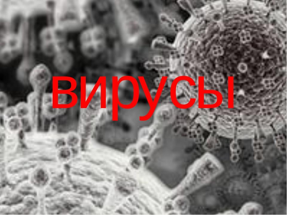 Узнать: Что такое вирусы, строение вирусов, особенности их жизнедеятельности,...