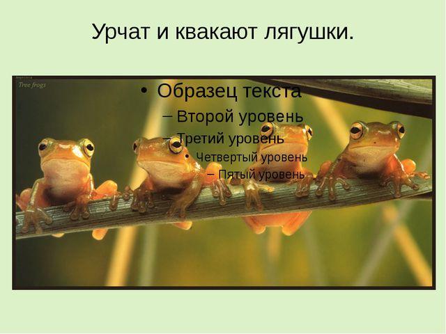 Урчат и квакают лягушки.