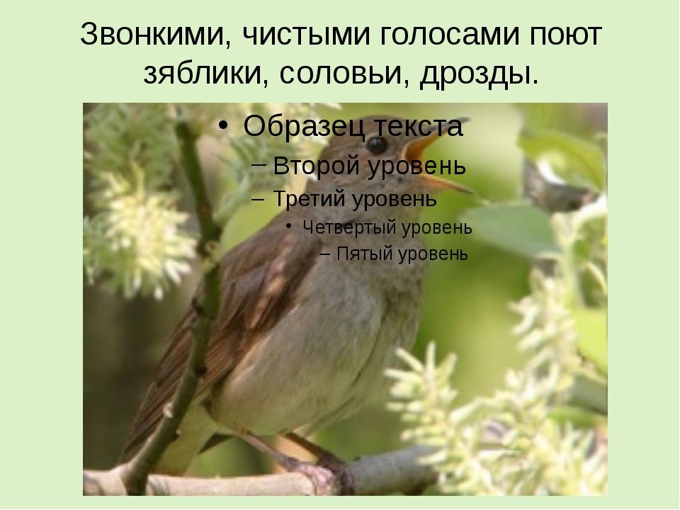 Звонкими, чистыми голосами поют зяблики, соловьи, дрозды.