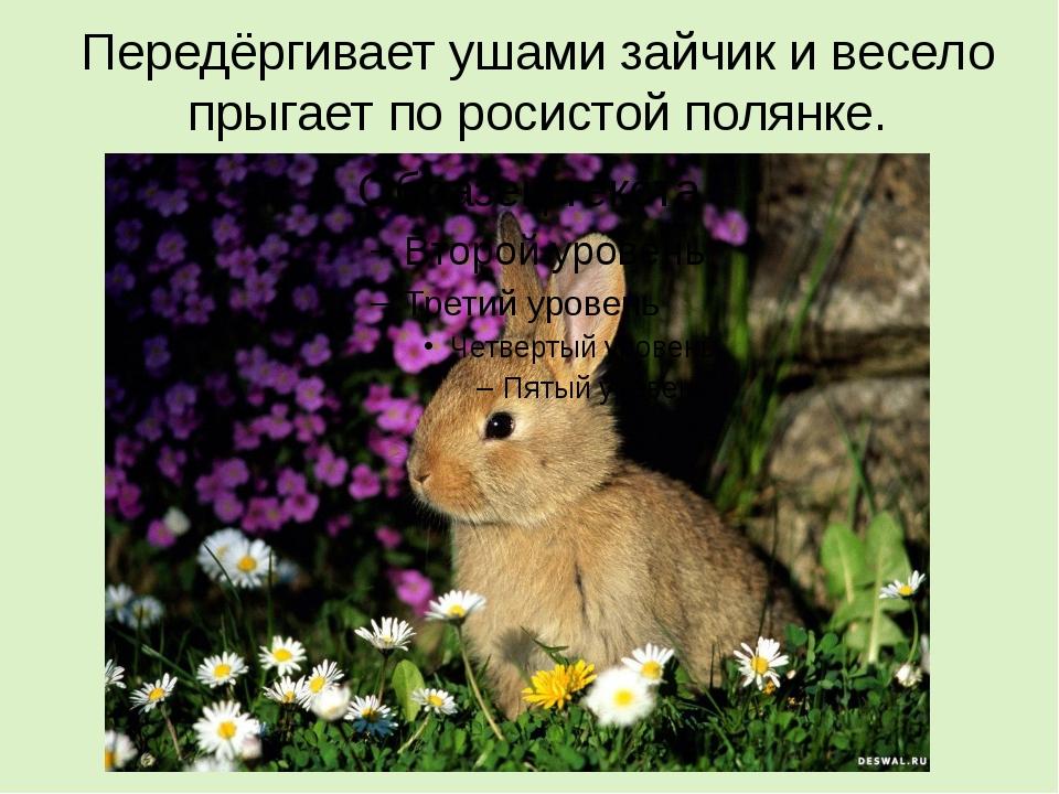 Передёргивает ушами зайчик и весело прыгает по росистой полянке.