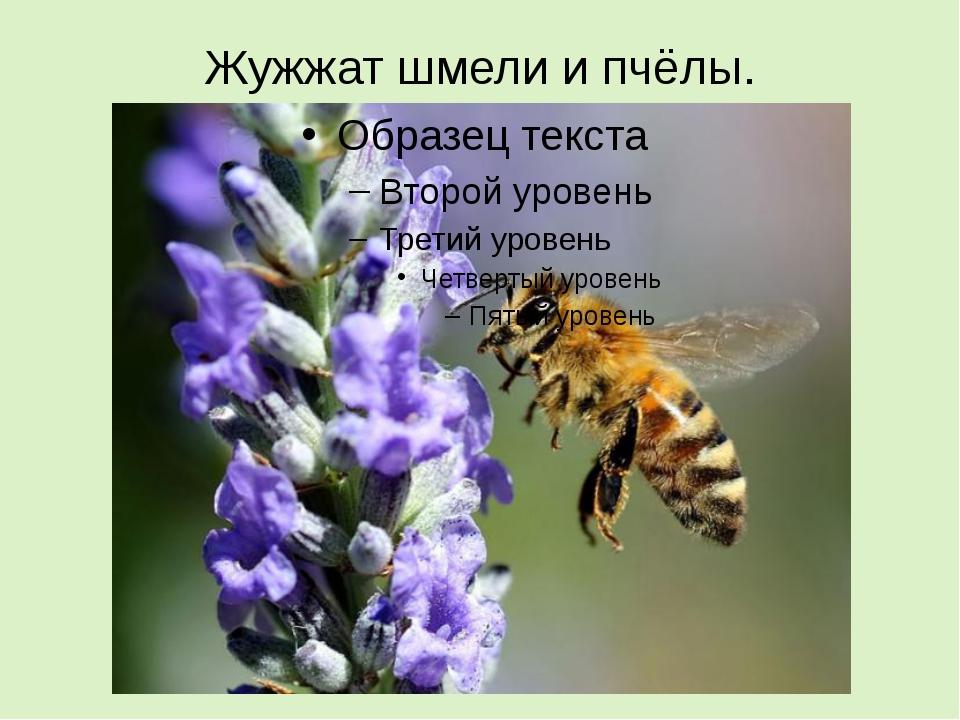 Жужжат шмели и пчёлы.