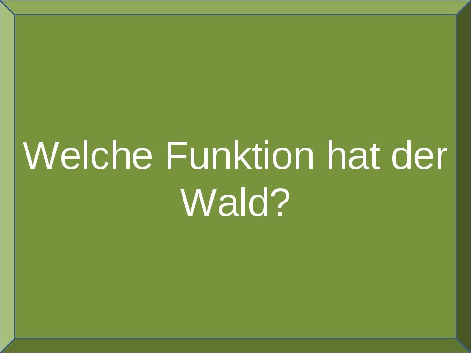 Welche Funktion hat der Wald?