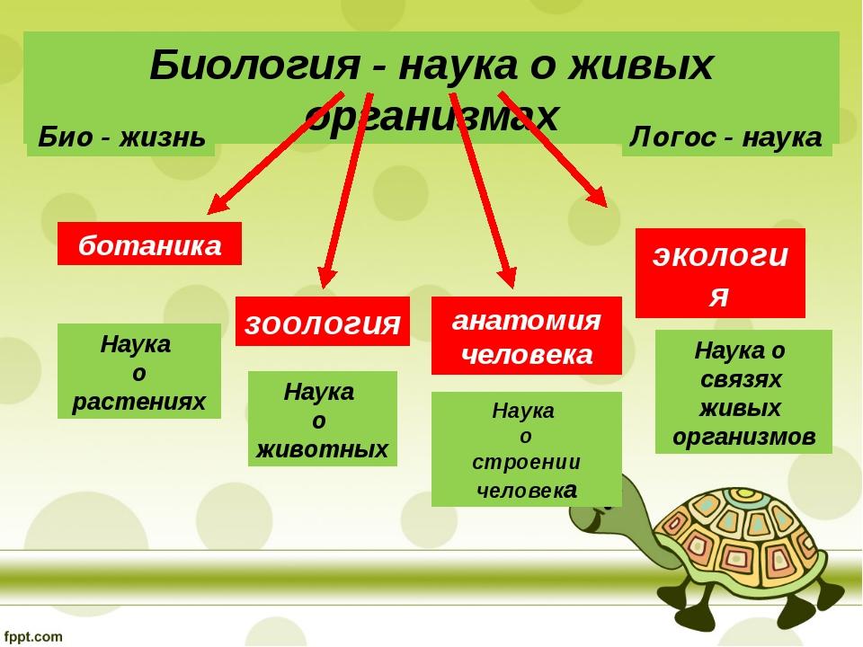 Биология - наука о живых организмах ботаника зоология экология анатомия челов...
