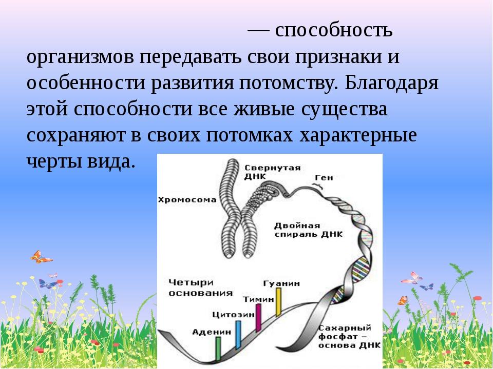 Насле́дственность— способность организмов передавать свои признаки и особен...