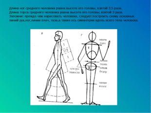 Длина ног среднего человека равна высоте его головы, взятой 3,5 раза. Длина т