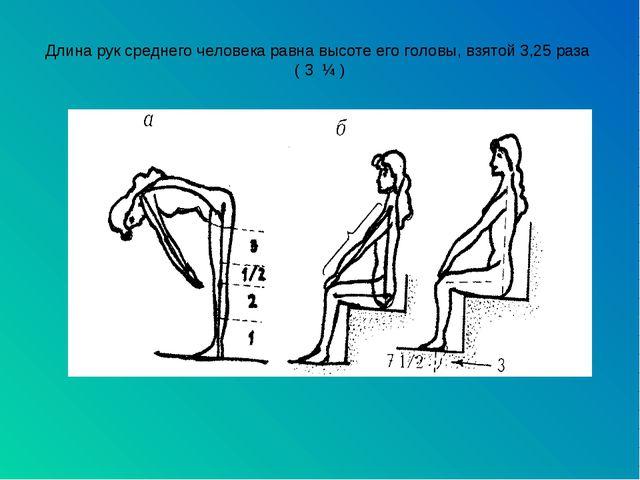 Длина рук среднего человека равна высоте его головы, взятой 3,25 раза ( 3 ¼ )