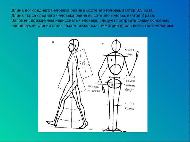 Длина ног среднего человека равна высоте его головы, взятой 3,5 раза. Длина т...