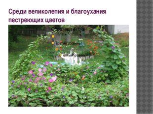 Среди великолепия и благоухания пестреющих цветов