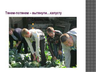 Тянем-потянем – вытянули…капусту