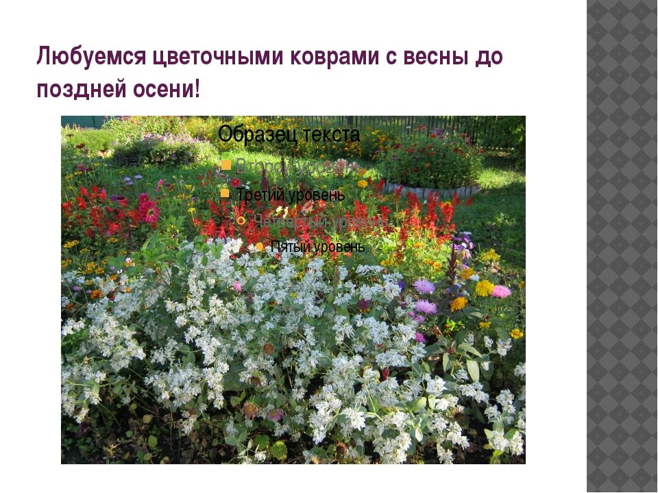 Любуемся цветочными коврами с весны до поздней осени!