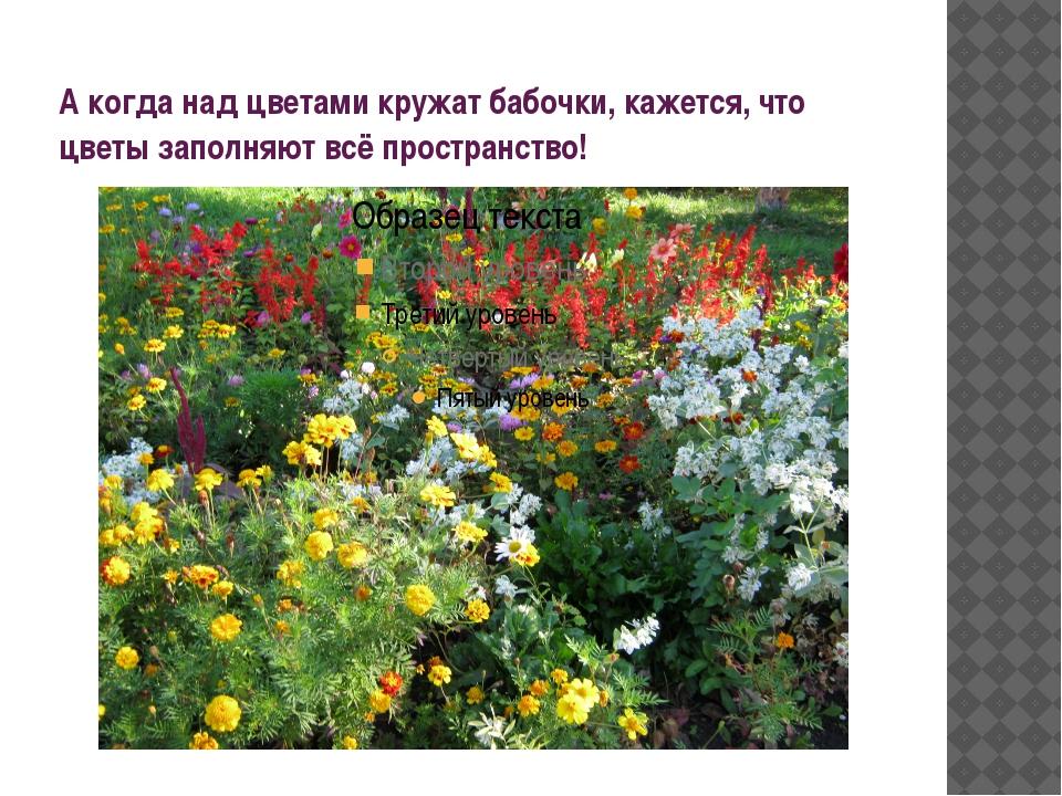 А когда над цветами кружат бабочки, кажется, что цветы заполняют всё простран...