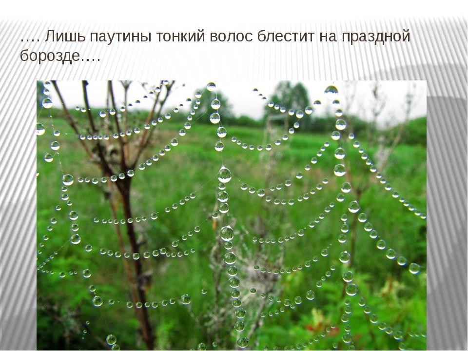 …. Лишь паутины тонкий волос блестит на праздной борозде….