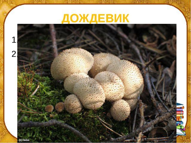 ДОЖДЕВИК ПЛАЩ ГРИБ ©Ольга Михайловна Носова