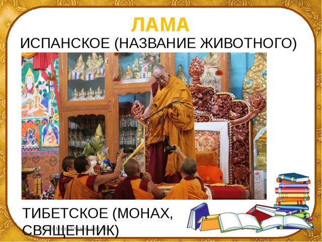 ЛАМА ИСПАНСКОЕ (НАЗВАНИЕ ЖИВОТНОГО) ТИБЕТСКОЕ (МОНАХ, СВЯЩЕННИК) ©Ольга Миха...
