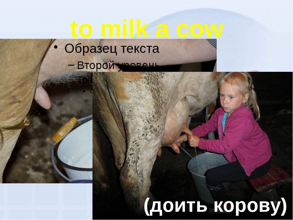 to milk a cow (доить корову)