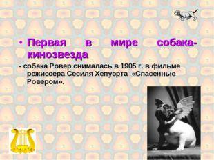 Первая в мире собака-кинозвезда - собака Ровер снималась в 1905 г. в фильме р