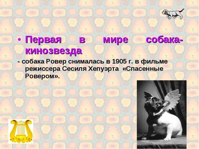 Первая в мире собака-кинозвезда - собака Ровер снималась в 1905 г. в фильме р...
