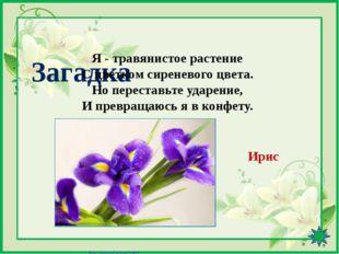 Интернет-ресурсы http://pedsovet.su/load/391-1-0-41601 - Шаблон «8 Марта» (ц