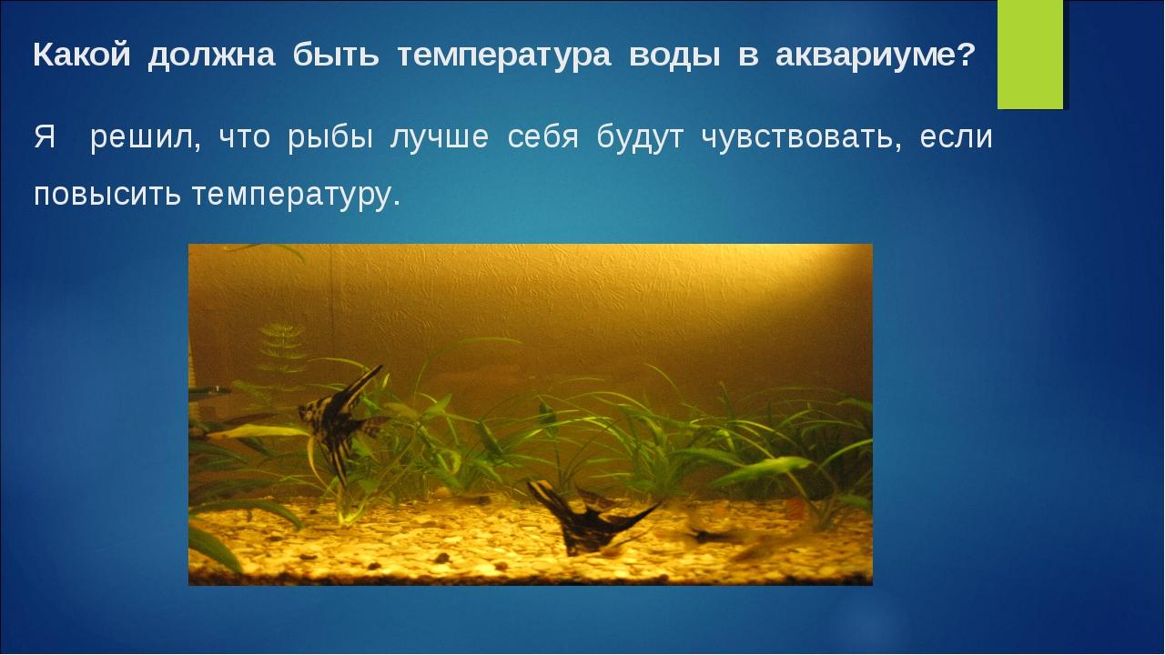 Какой должна быть температура воды в аквариуме? Я решил, что рыбы лучше себя...