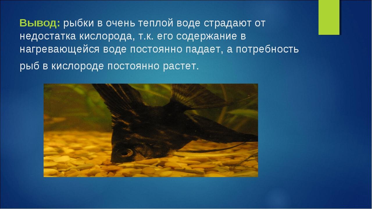 Вывод: рыбки в очень теплой воде страдают от недостатка кислорода, т.к. его с...