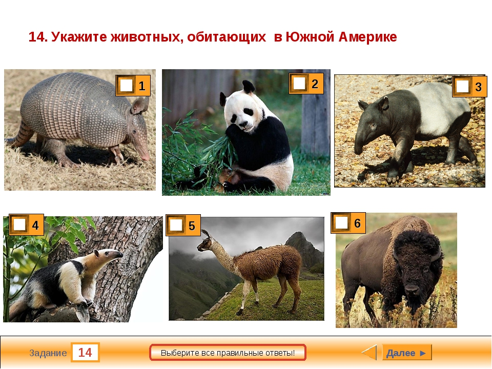 14 Задание Выберите все правильные ответы! 14. Укажите животных, обитающих в...